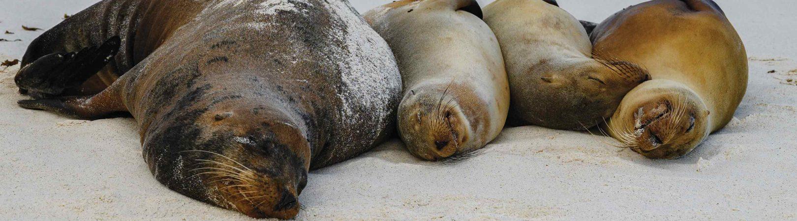 As selvagens e maravilhosas Ilhas Galápagos